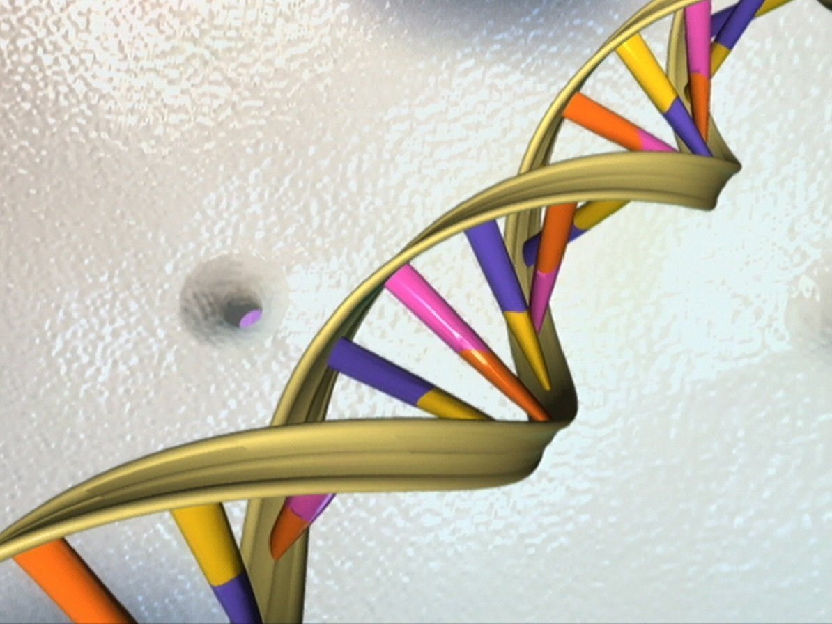 DNA Double Helix, Credit: National Human Genome Research Institute, National Institutes of Health. www.genome.gov